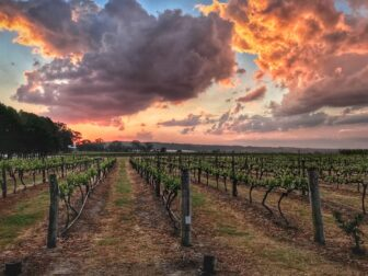Wineyard-at-sunset-Queensland