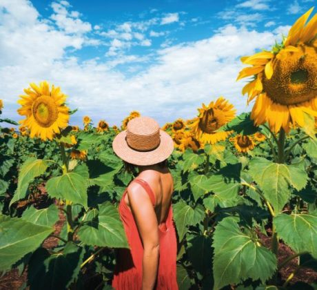 Person-in-sunflower-field-Allora