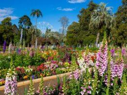 Toowoomba Carnival of Flowers 2020