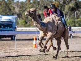 Tara Festival of Culture and Camel Races