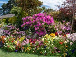 Toowoomba Chronicle Garden Competition/Garden for Good
