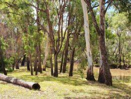Clover Hill Accommodation & Camping