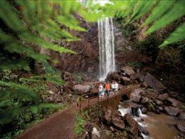 Queen Mary Falls circuit, Main Range National Park